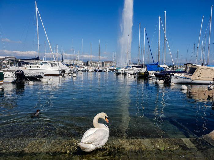 Visiter Genève en une journée vue sur le jet d'eau 2