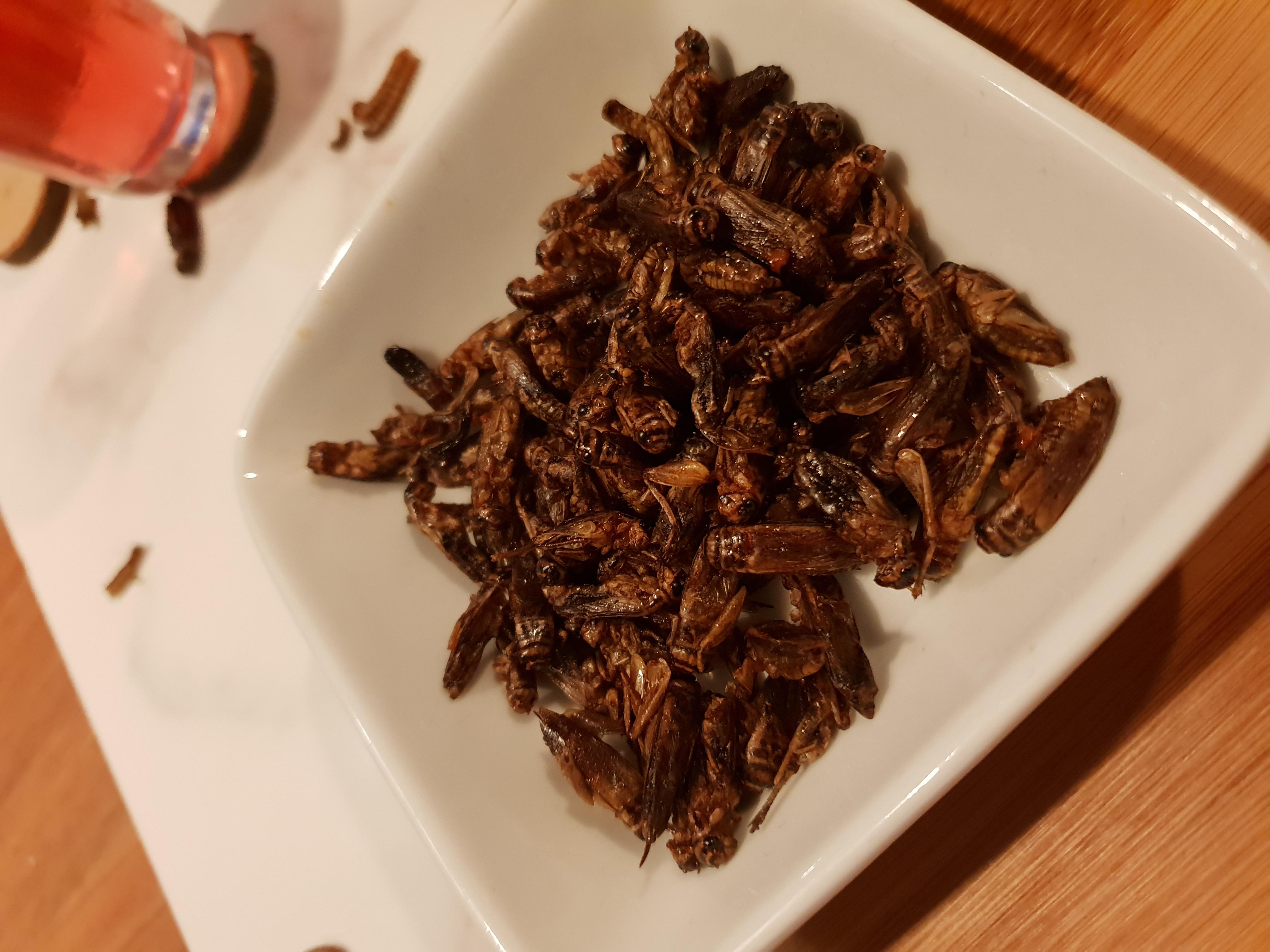 Manger des grillons pour booster votre santé intestinale