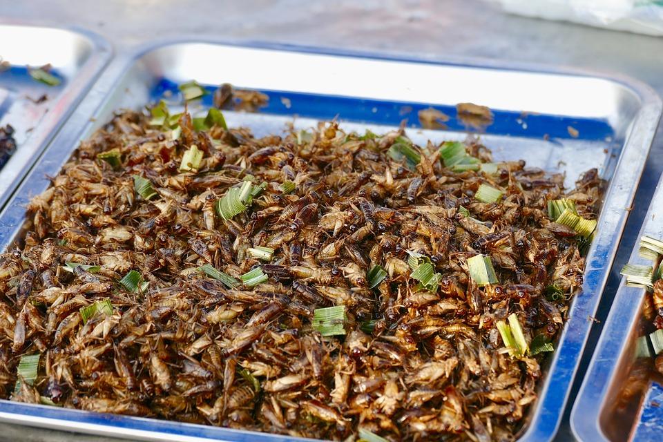 Manger des insectes sera-t-il la norme dans le futur 1
