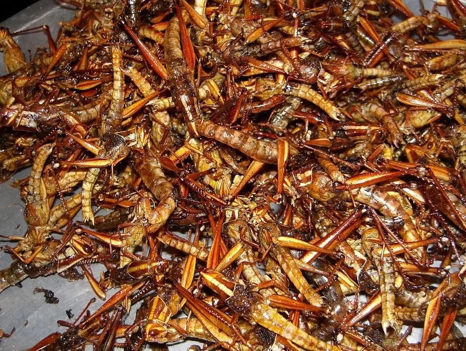 Les insectes comme aliments