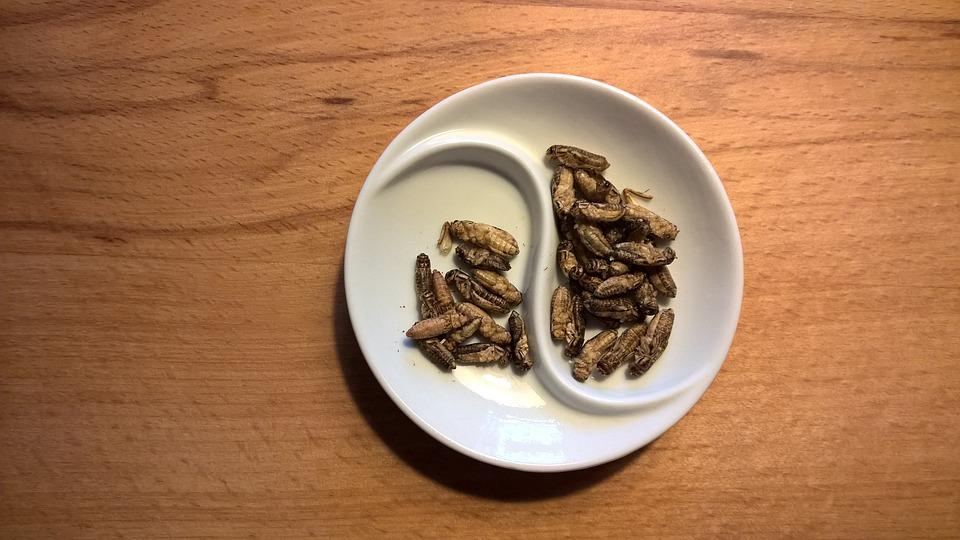 Manger des insectes est très nutritif