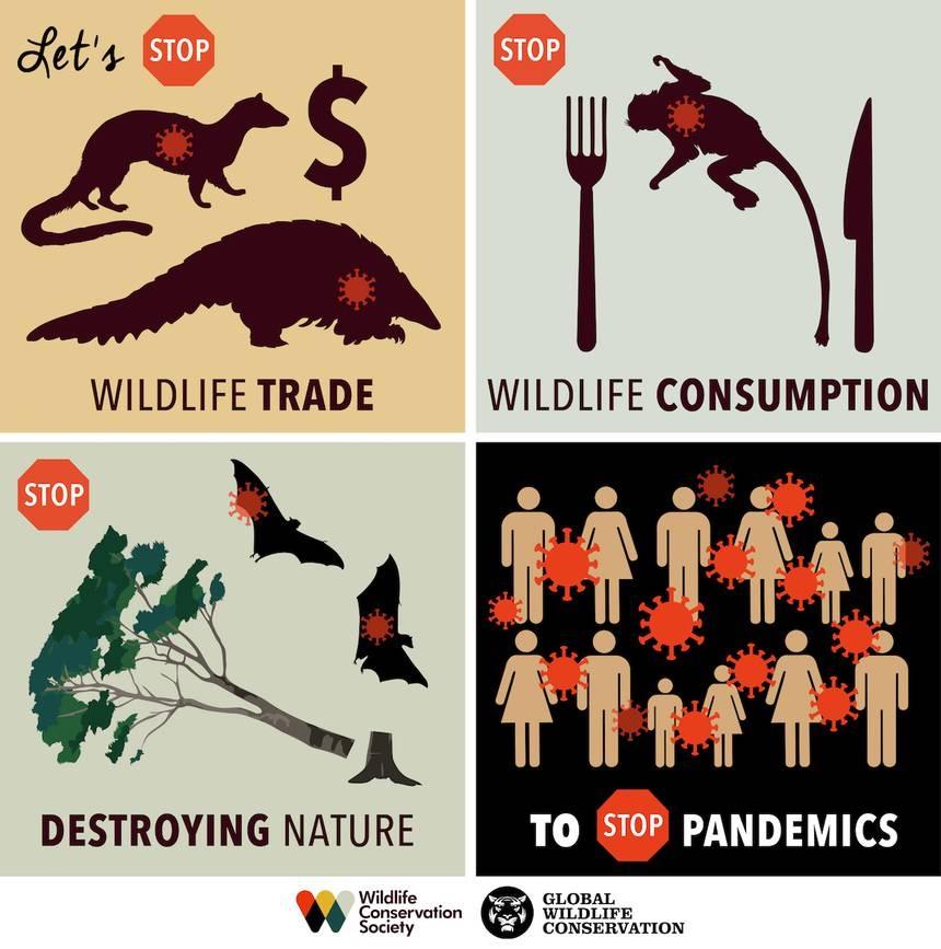 Zoonose - Comment stopper les futures pandémies en 3 étapes faciles