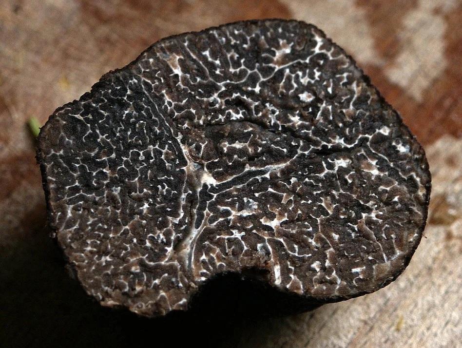umami champignons truffes