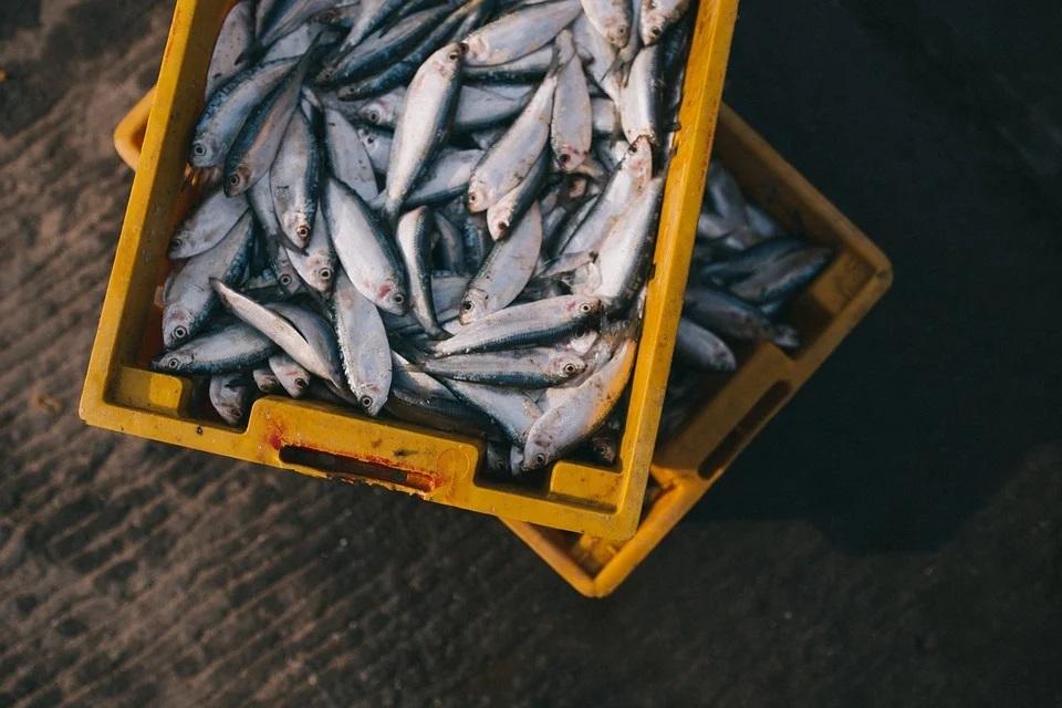 Des changements alimentaires pourvos poissons et fruits de mer